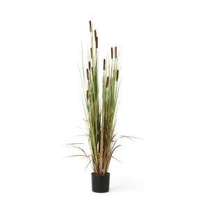 Enea artificial plant